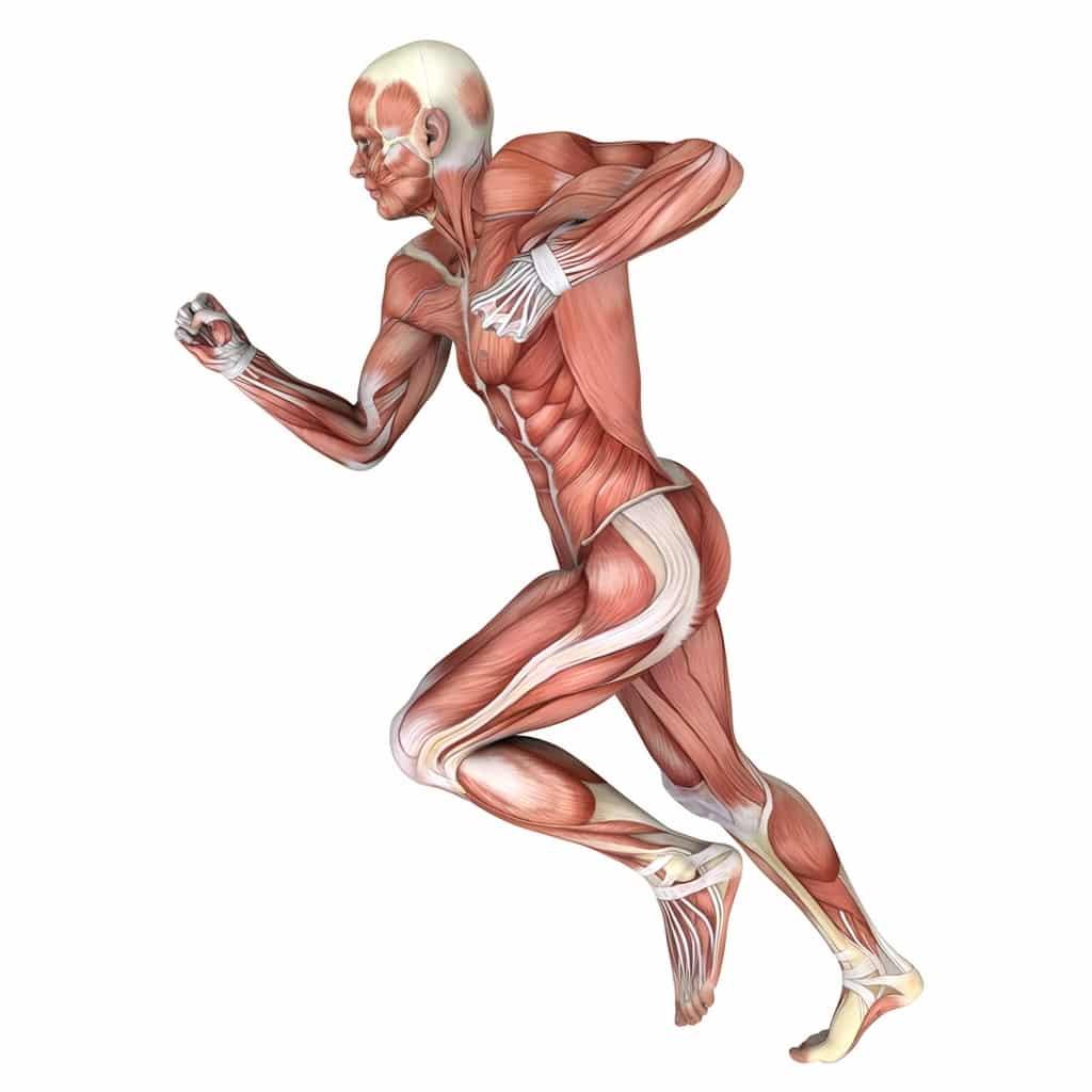 رياضة الأجسام