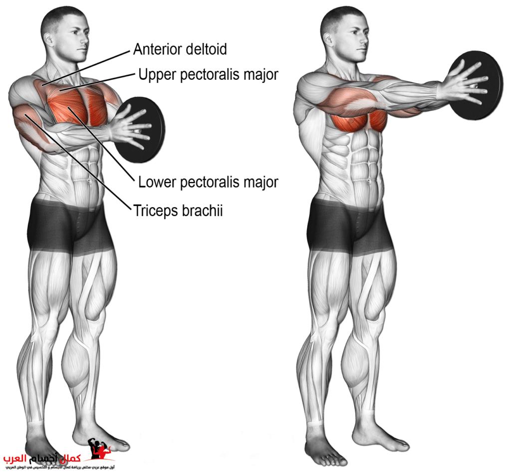 تمرين Svend press لعضلة الصدر