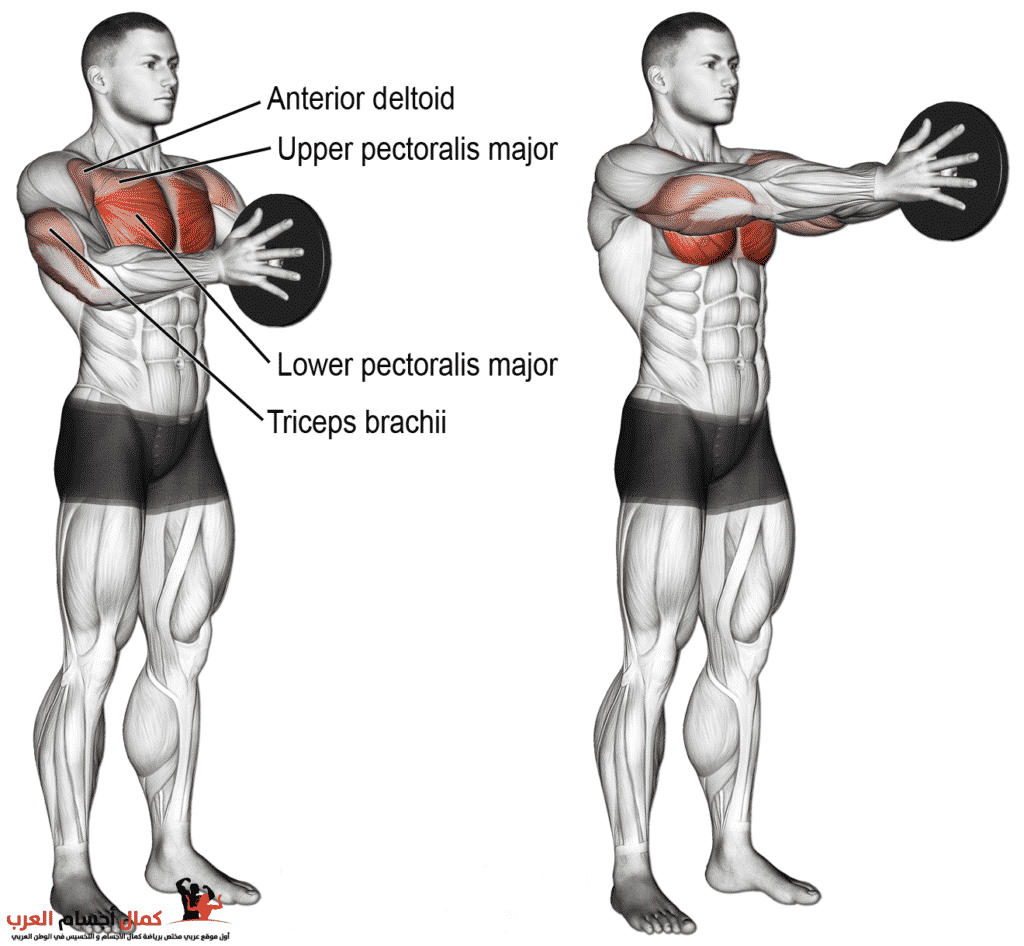 Photo of تمرين Svend press لعضلة الصدر