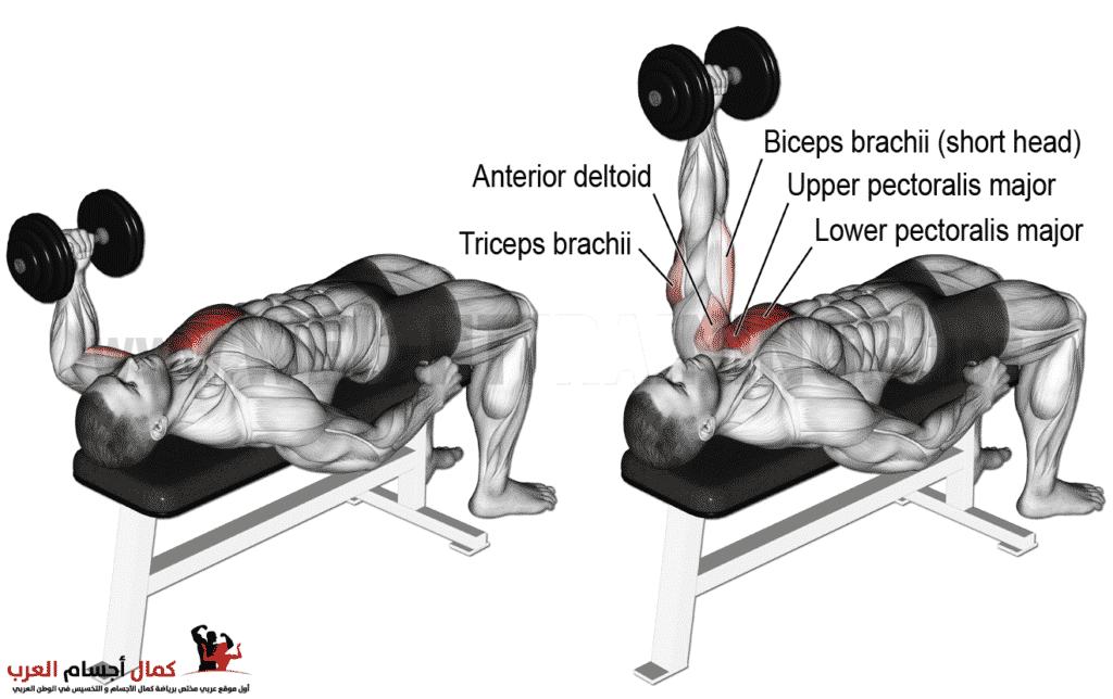 Photo of تك دمبلص مستوي لعضلات الصدر للاعبي كمال الاجسام