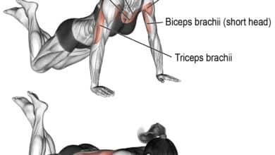 Photo of تمرين الضغط على الركبتين