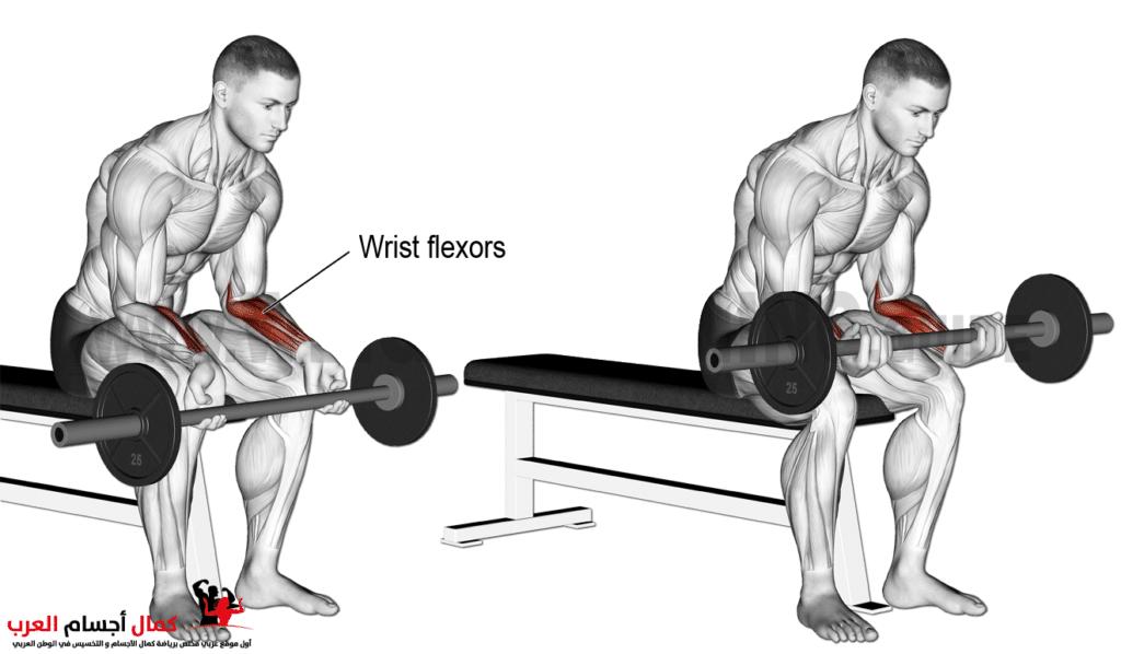 عضلة الساعد والرست بالبار لتضخيم الذراع