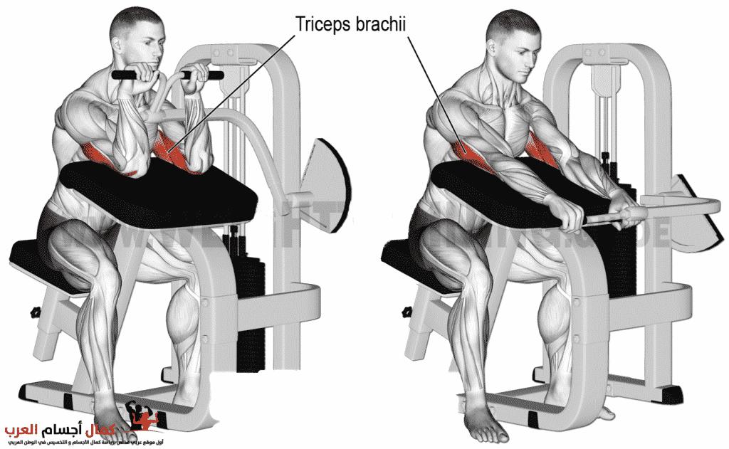 Photo of لاري مقلوب للترايسبس لزيادة حجم العضلة