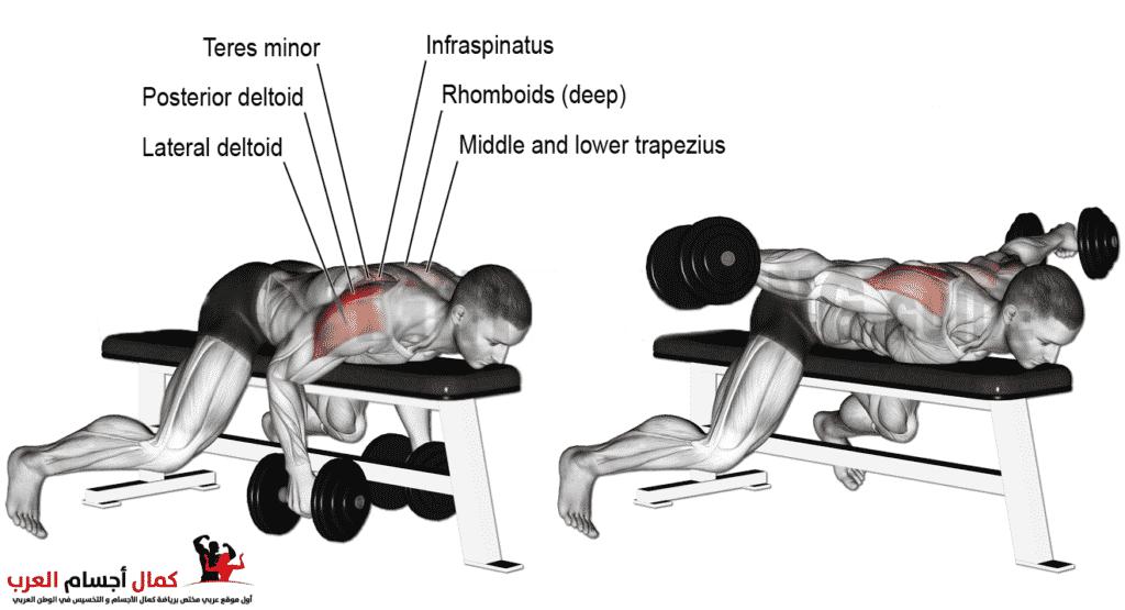 Photo of نشر دامبلز زوجي نائم جانبى لتقوية عضلات الكتف في كمال الاجسام