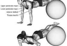 Photo of تمرين الضغط العكسى بإستخدام كرة التوازن