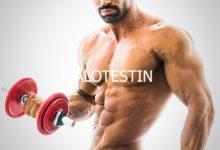 Photo of هرمون الهالوتستين Halotestin وفوائده الصحية للاعبي رفع الأثقال